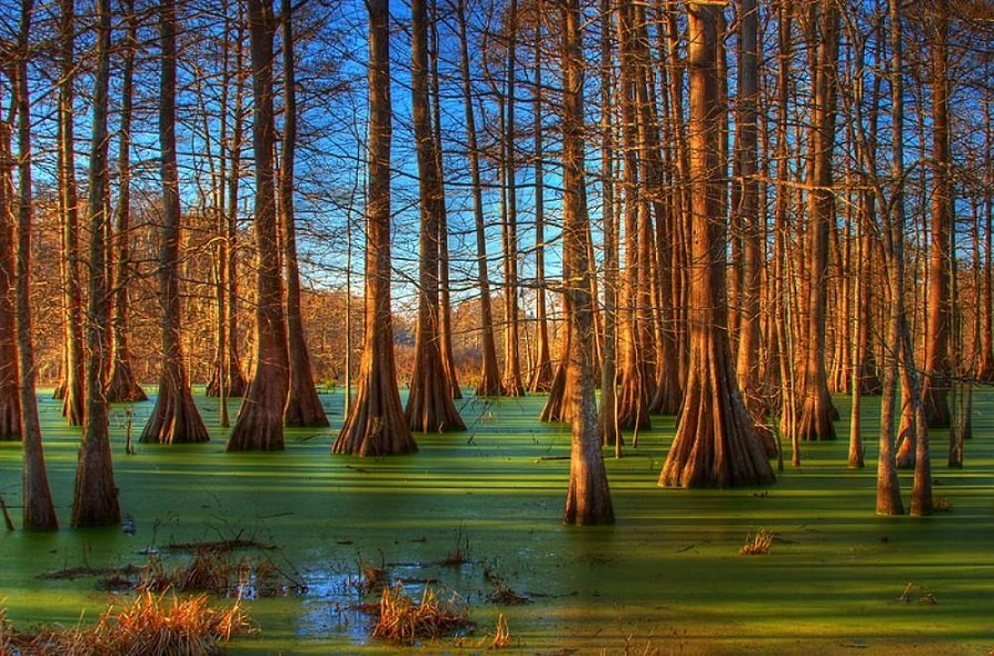 swamp-sunrise-louisiana