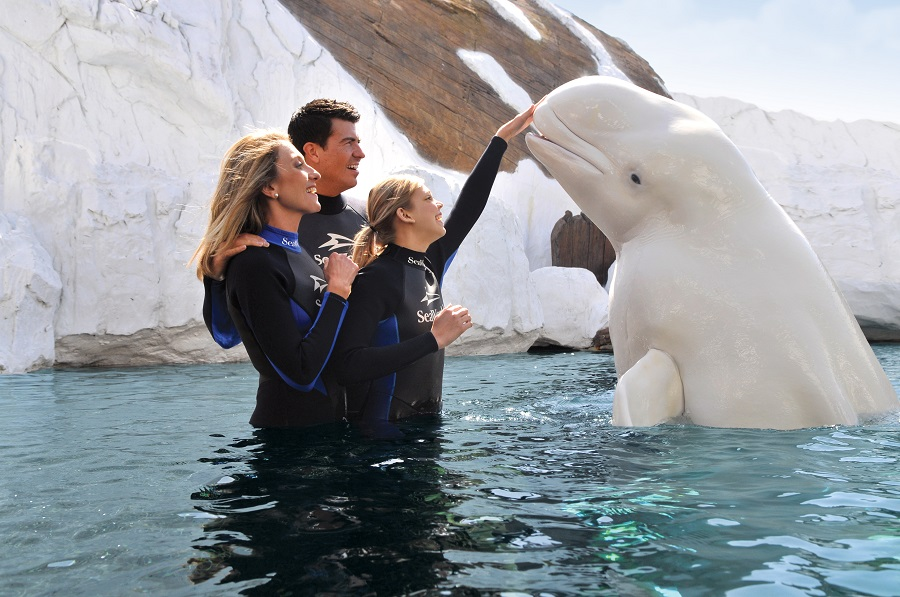 beluga-interaction-at-seaworld