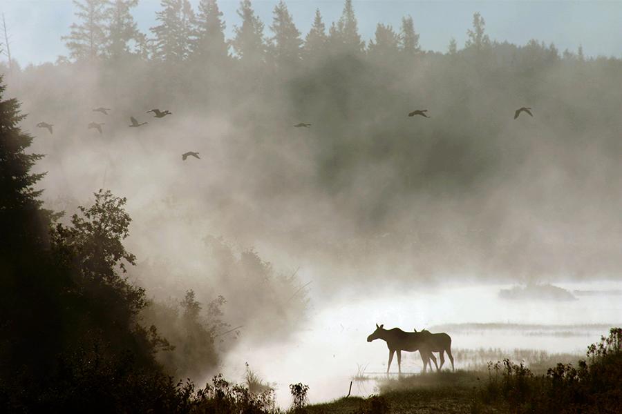 USTRAVELER Refugio Nacional de Vida Silvestre de Aroostook