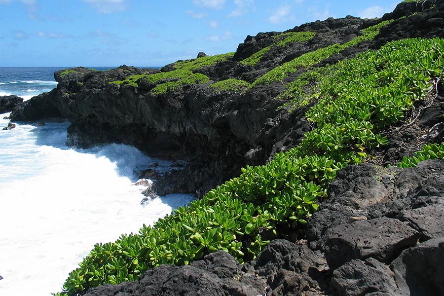 hawaii us traveler