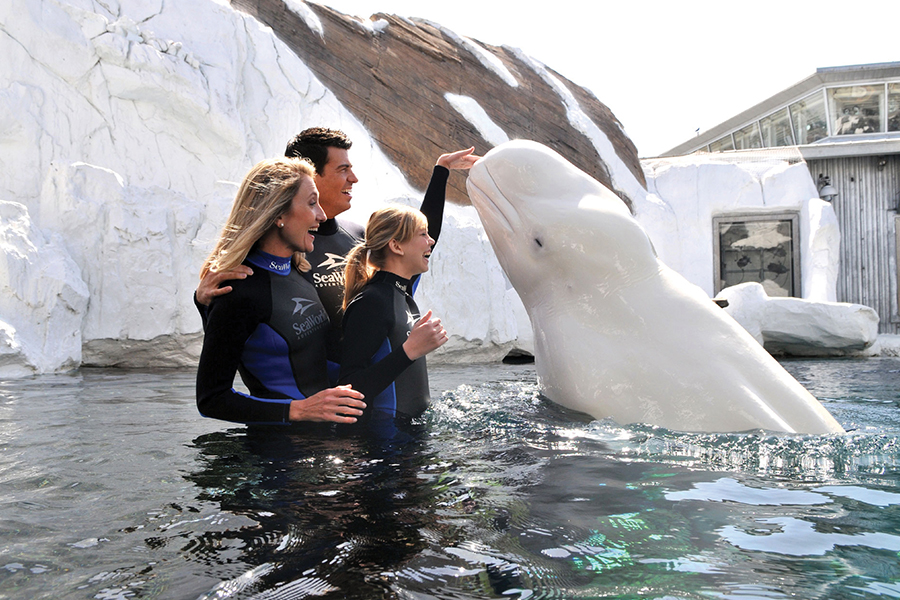 Interacciones con Belugas